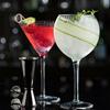 Hayworth Cocktail Glasses R90229